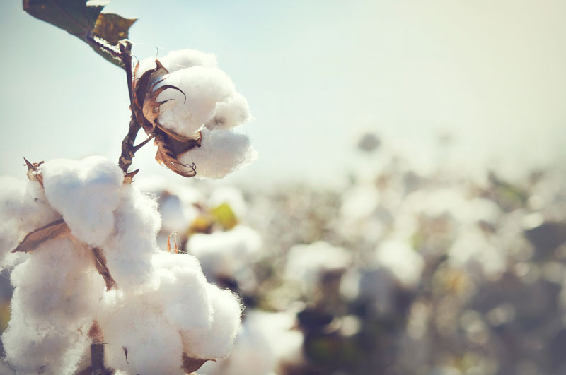 Cotton WE ARE CLEAN CLEAN FASHION
